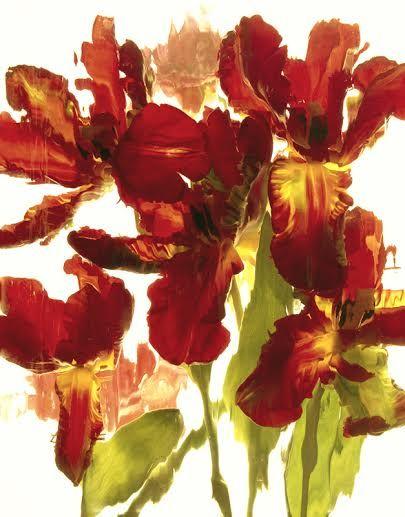 Wild Flower Series 17 - andrzej pluta