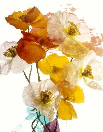 Wild Flower Series 015 - andrzej pluta