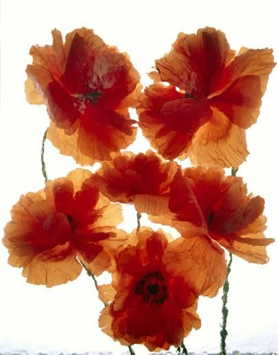 Wild Flower Series 13 - andrzej pluta