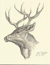 Ken McGee Wildlife Artist