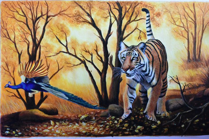 Tiger with Peacock - Wild Life