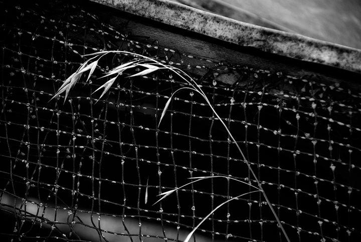 Grass among fence - Gregg's Americana