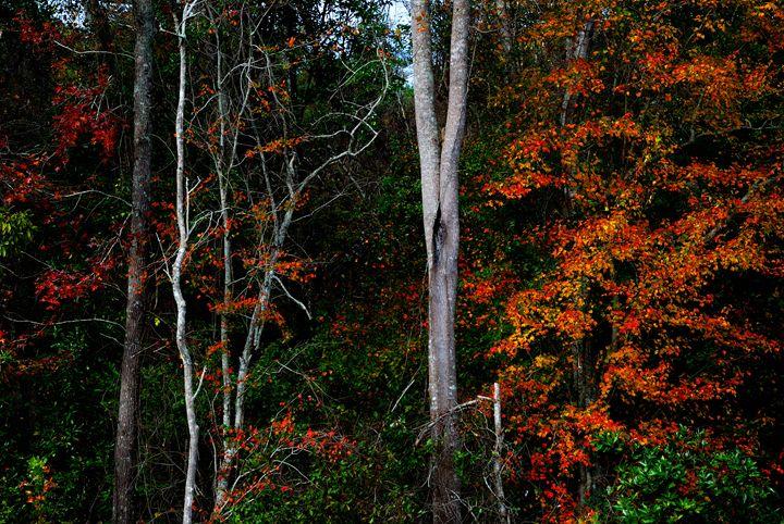 Fall colors - Gregg's Americana