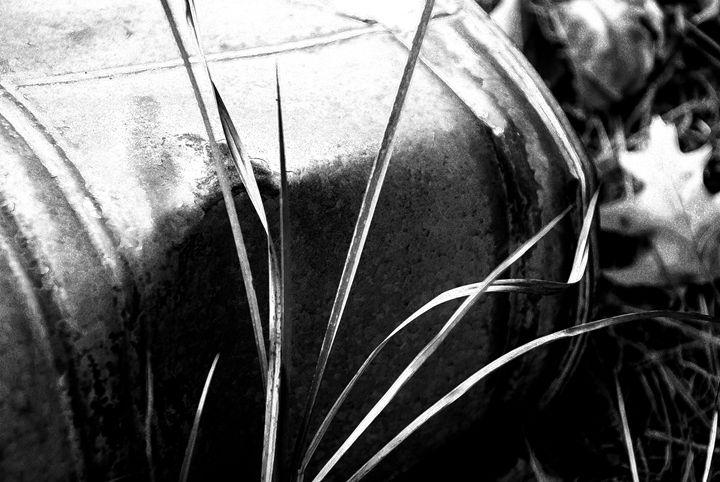 Grass by bucket - Gregg's Americana
