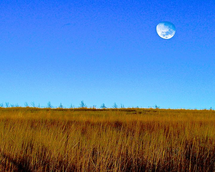Moon over the field - Hidden Mouse Art