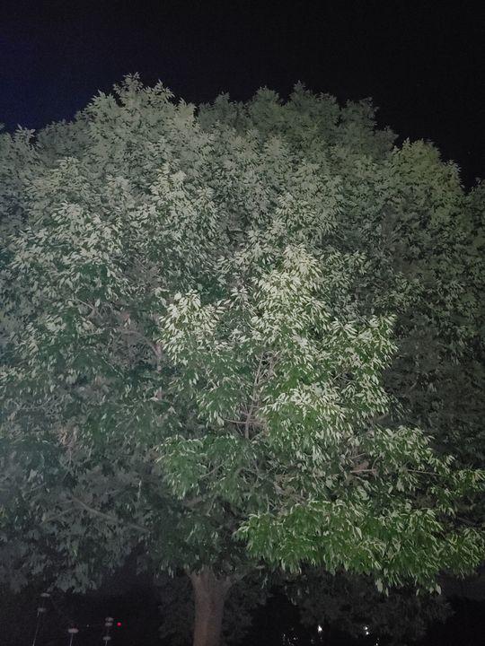 Tree in the dark - Hidden Mouse Art