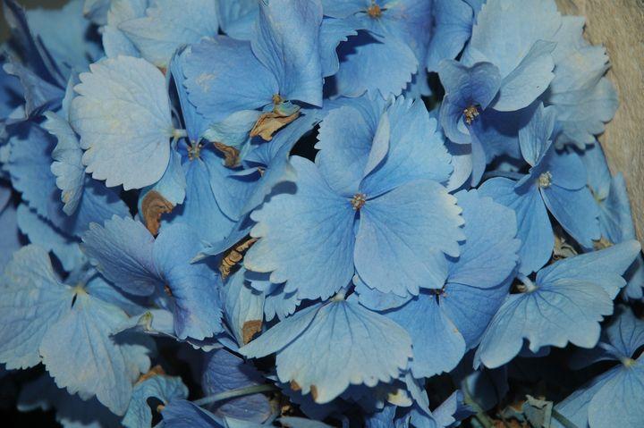 Blue Flowers - Hidden Mouse Art