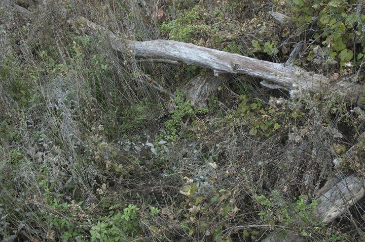 Stomped forest floor - Hidden Mouse Art