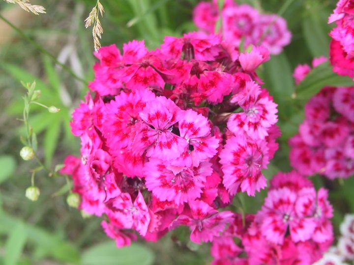 Hot Pink Flowers - Hidden Mouse Art