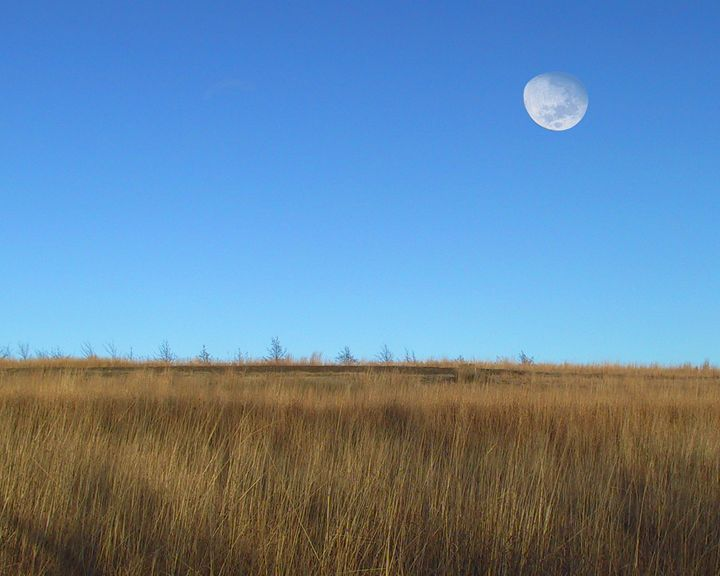 Moon over lonesome field - Hidden Mouse Art