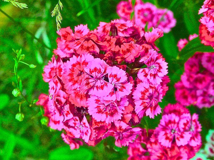 bright pink flowers - Hidden Mouse Art