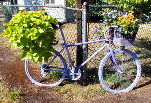 Lovely Lavender Bicycle- Oregon