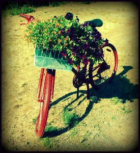 Blooming bikes of Westfir Oregon