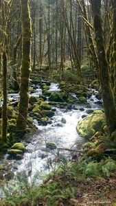 Mossy River -Westfir Oregon