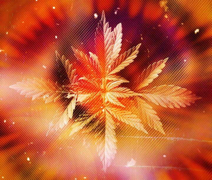 Cannaburst - cannabis art - Su Stella