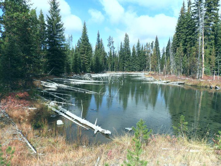 Cultus River, Oregon - Su Stella