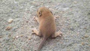 a newborn mice