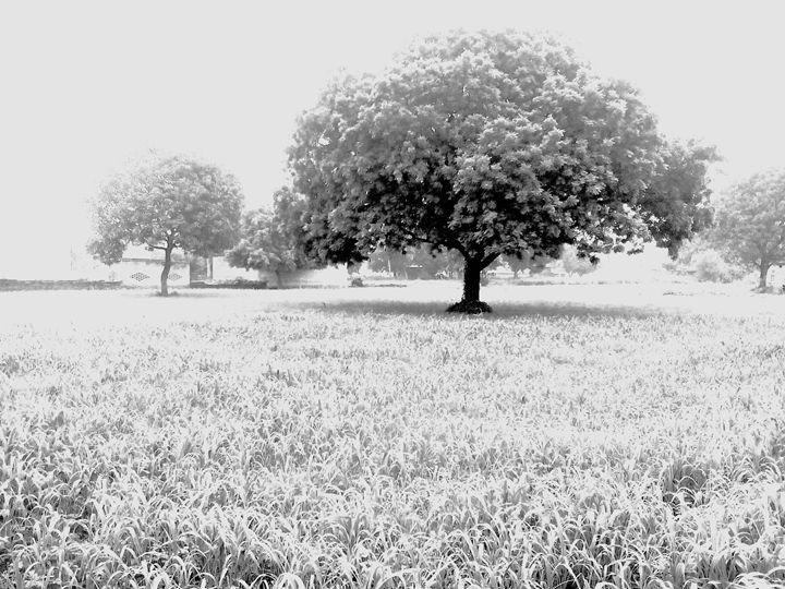Neem tree - Sneha cosmosian