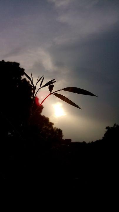 Sun set 2 - Sneha cosmosian