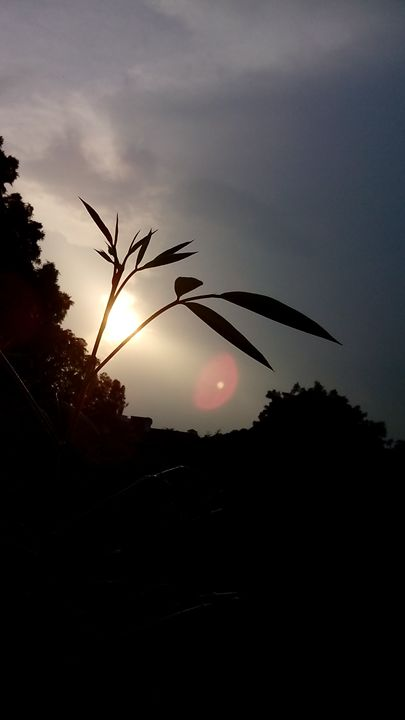 sun set - Sneha cosmosian