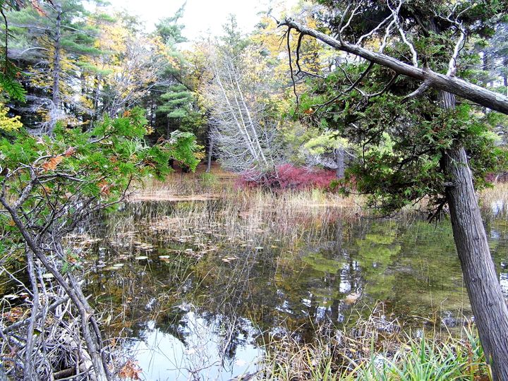 AuSauble River - Michigan's Natural Beauty