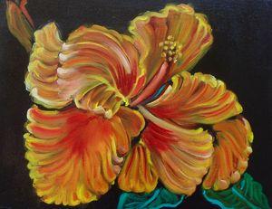 Hibiscus Royale