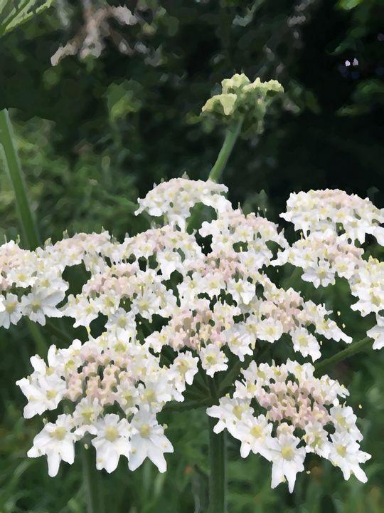 White Flora Daisy-Like Cluster - JmRip24