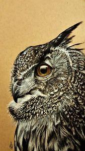Realistic charcoal Owl portrait