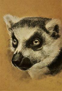 Realistic charcoal lemur portrait