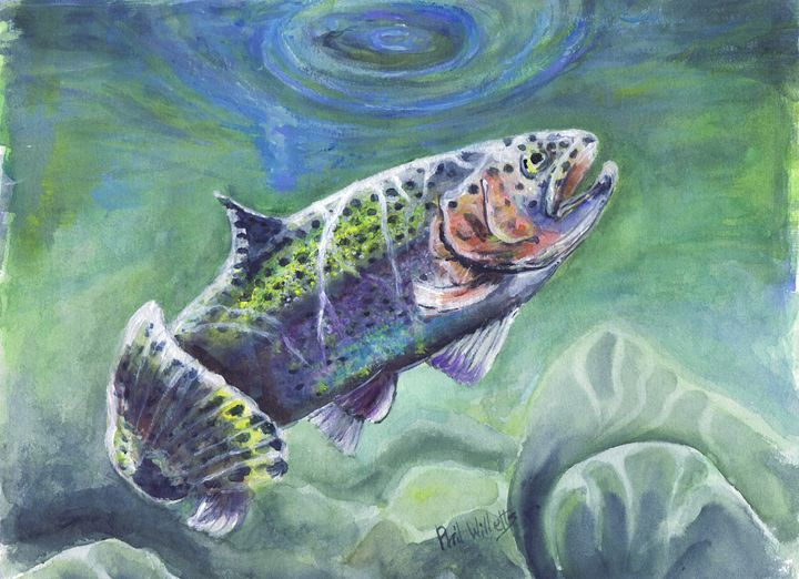 The rainbow trout - Phil Willetts
