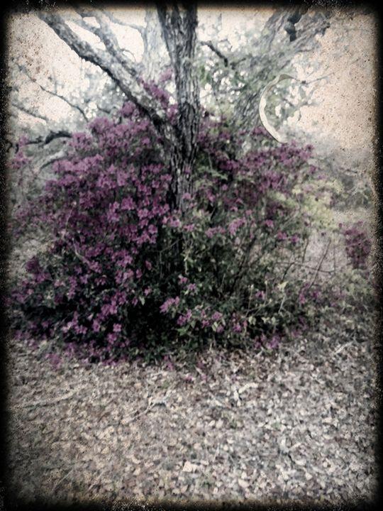 Purple - Dawn Haschalk