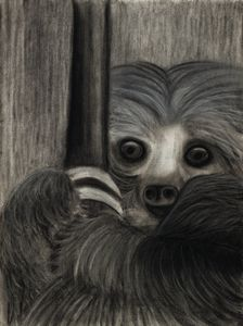 Two Toed Sloth - Leala Marie Art