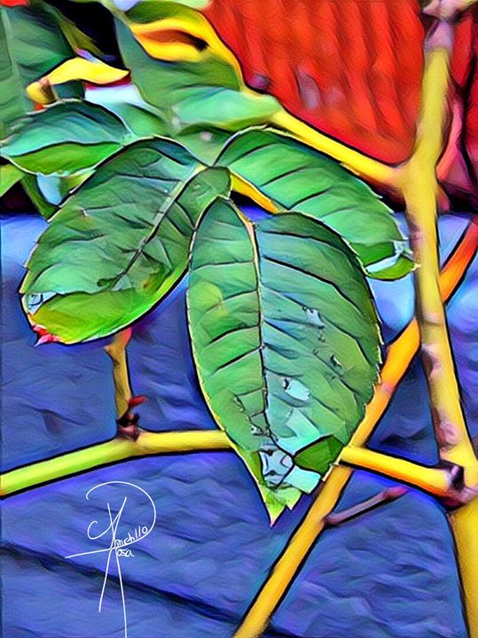 Nature spark - Rosa Portillo