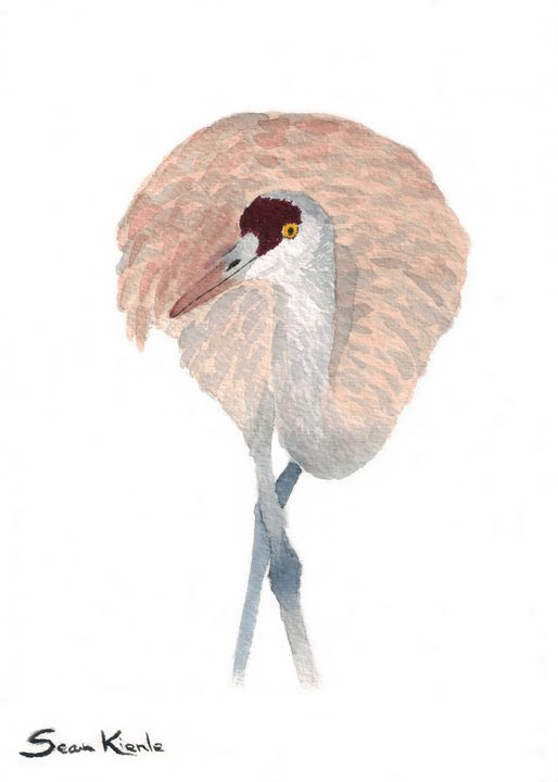 Crane - Sean Kienle Watercolor Designs