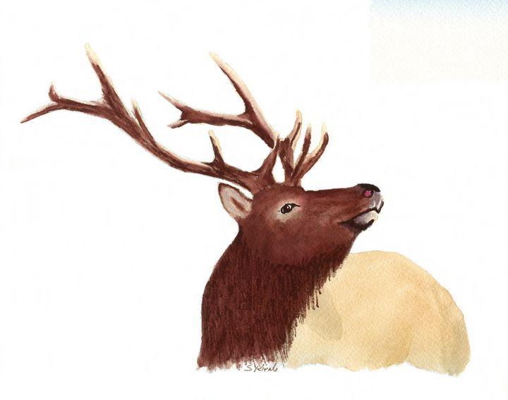 Wapiti - Sean Kienle Watercolor Designs