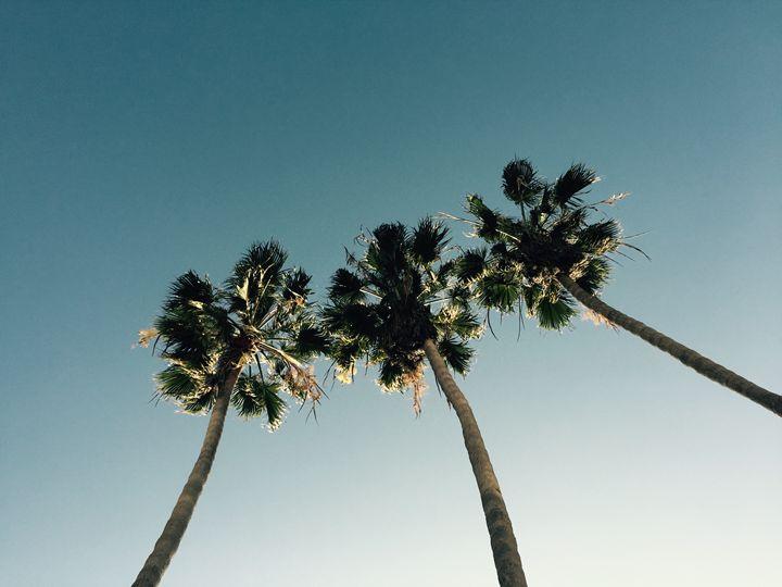 Palm Trees - Autumn Rose