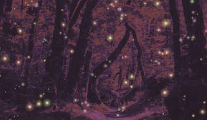 The Elderwoods