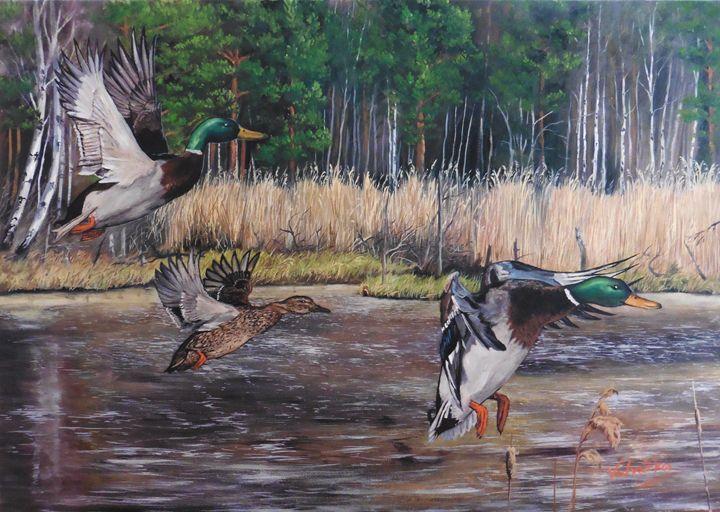 The ducks - Painter Marek Vodvářka