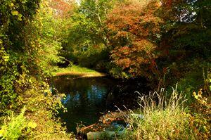 Fall Oasis