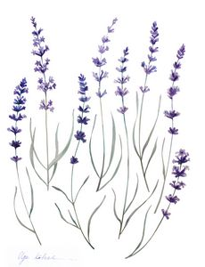 Watercolor Provence Lavender