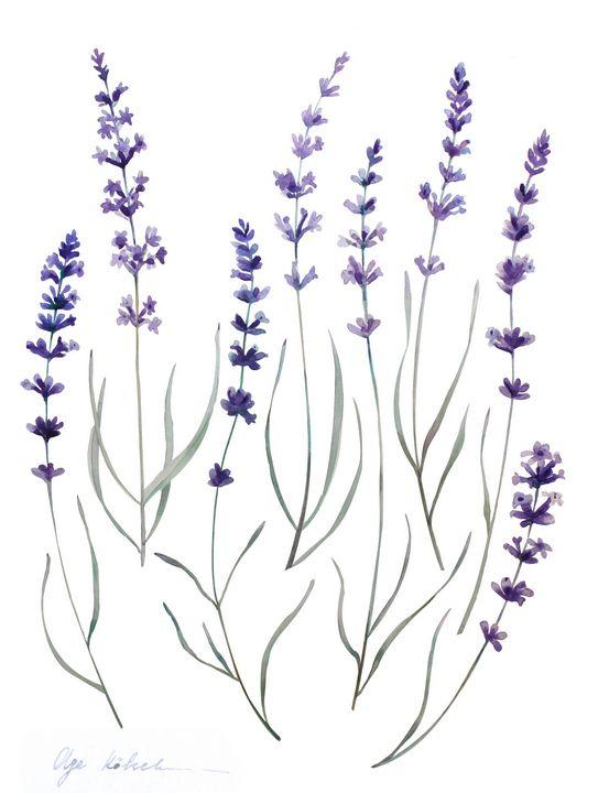 Watercolor Provence Lavender - Olga Koelsch
