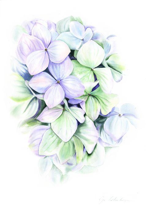 Mint Hydrangea Watercolor - Olga Koelsch