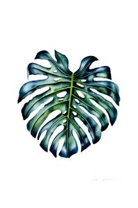 Emeral Monstera Leaf
