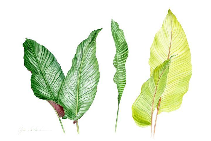 Tropical Leaves - Olga Koelsch