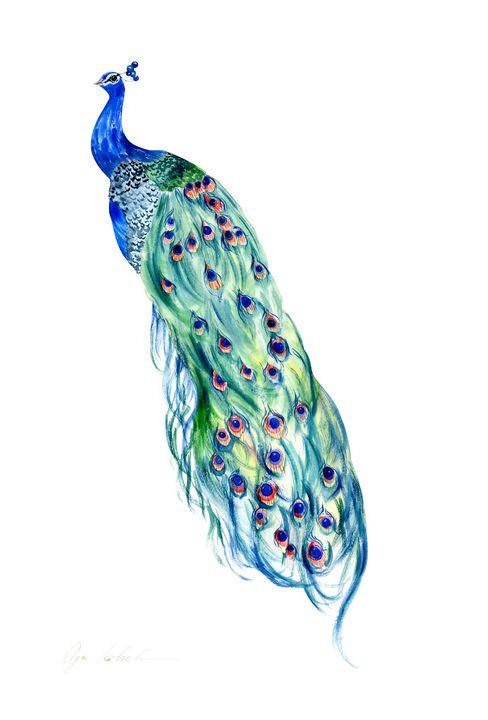 Peacock - Olga Koelsch