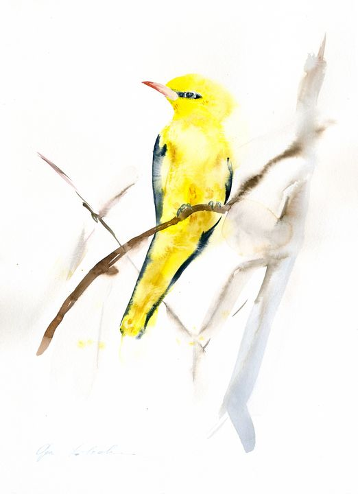 Oriole Bird - Olga Koelsch