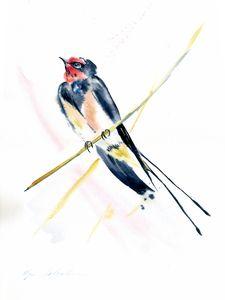 MARTLET BIRD