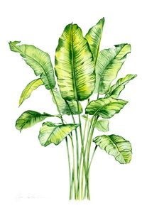 Watercolor Banana Leaves