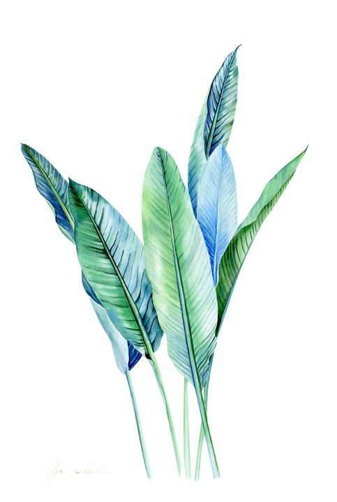 Blue Tropical Leaves Olga Koelsch Paintings Prints Flowers Plants Trees Trees Shrubs Palm Trees Artpal Tropical green branches, leaves and orange flowers. trees trees shrubs palm trees artpal