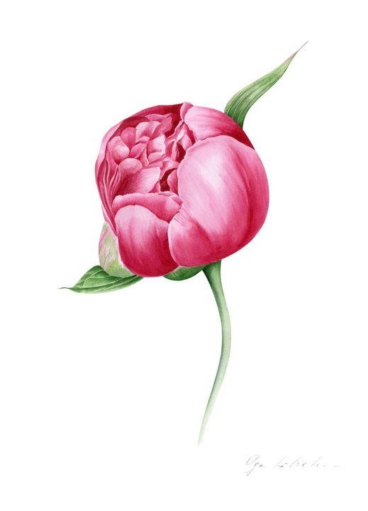 Pink Peony Bud - Olga Koelsch